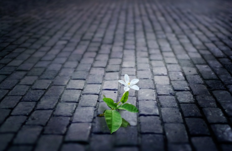 white flower growing on street floor old brick at night